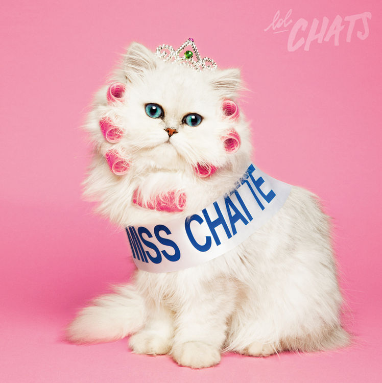 Gros tites chatte